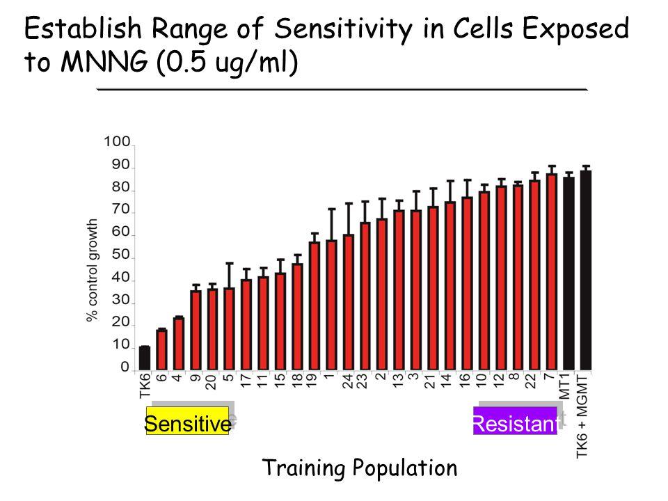 Establish Range of Sensitivity in Cells Exposed to MNNG (0.5 ug/ml)