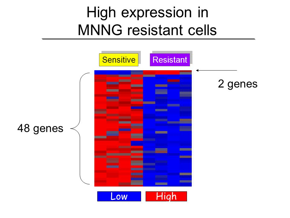 High expression in MNNG resistant cells
