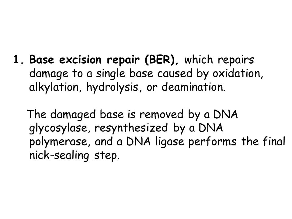 Base excision repair (BER), which repairs damage to a single base caused by oxidation, alkylation, hydrolysis, or deamination.
