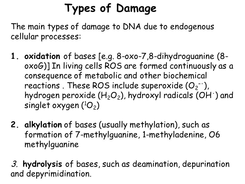 Types of Damage The main types of damage to DNA due to endogenous cellular processes: