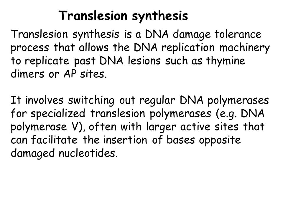 Translesion synthesis