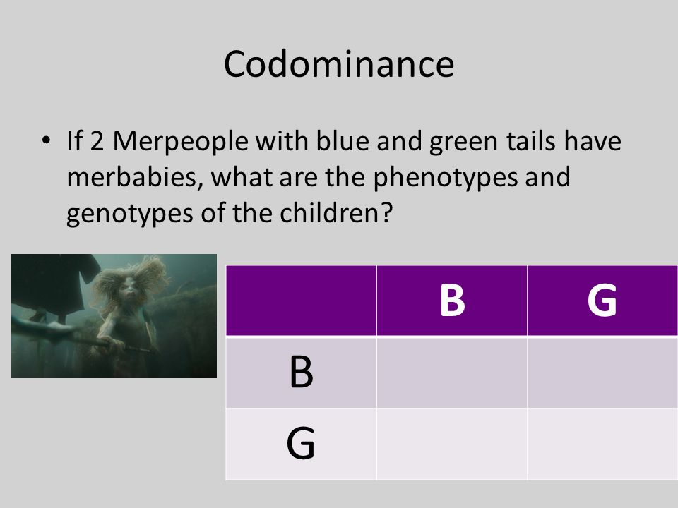 Codominance If 2 Merpeople with blue and green tails have merbabies, what are the phenotypes and genotypes of the children