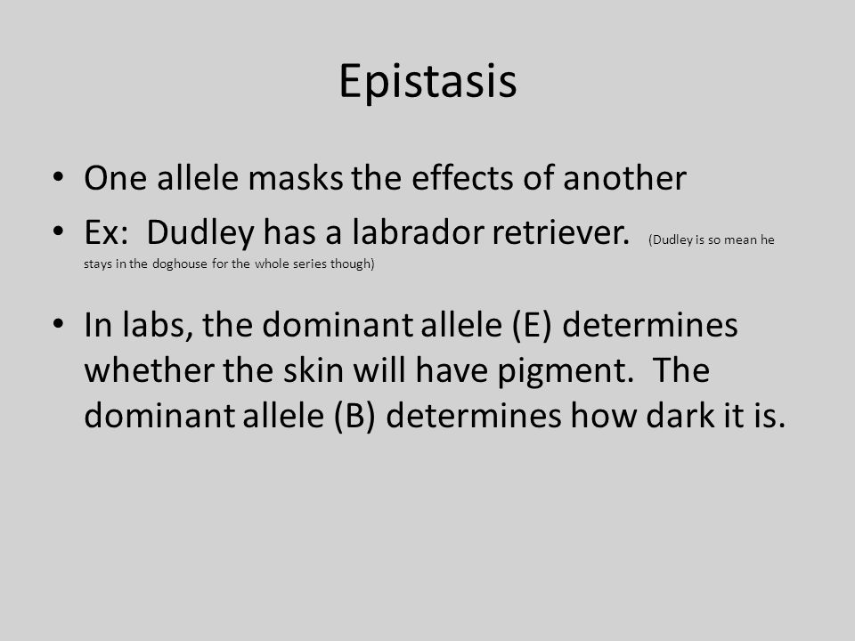 Epistasis One allele masks the effects of another