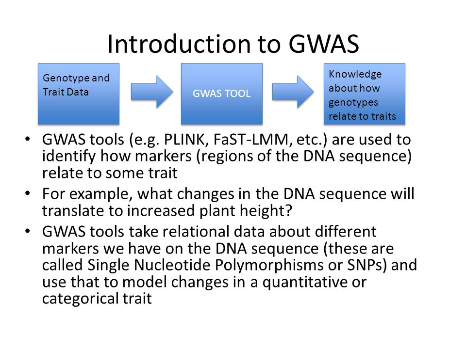 Introduction to GWAS GWAS TOOL. Knowledge about how genotypes relate to traits. Genotype and Trait Data.