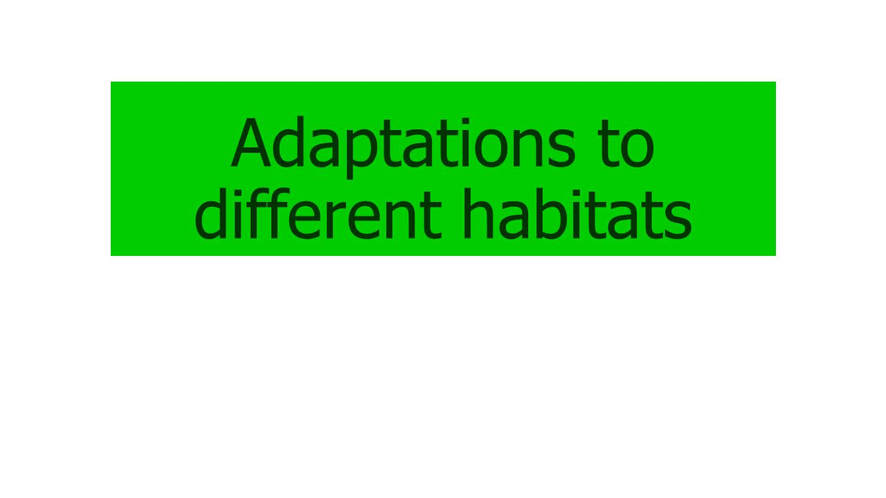 Adaptations to different habitats
