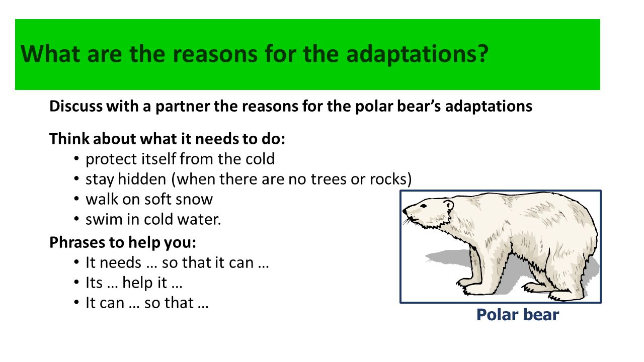 What are the reasons for the adaptations