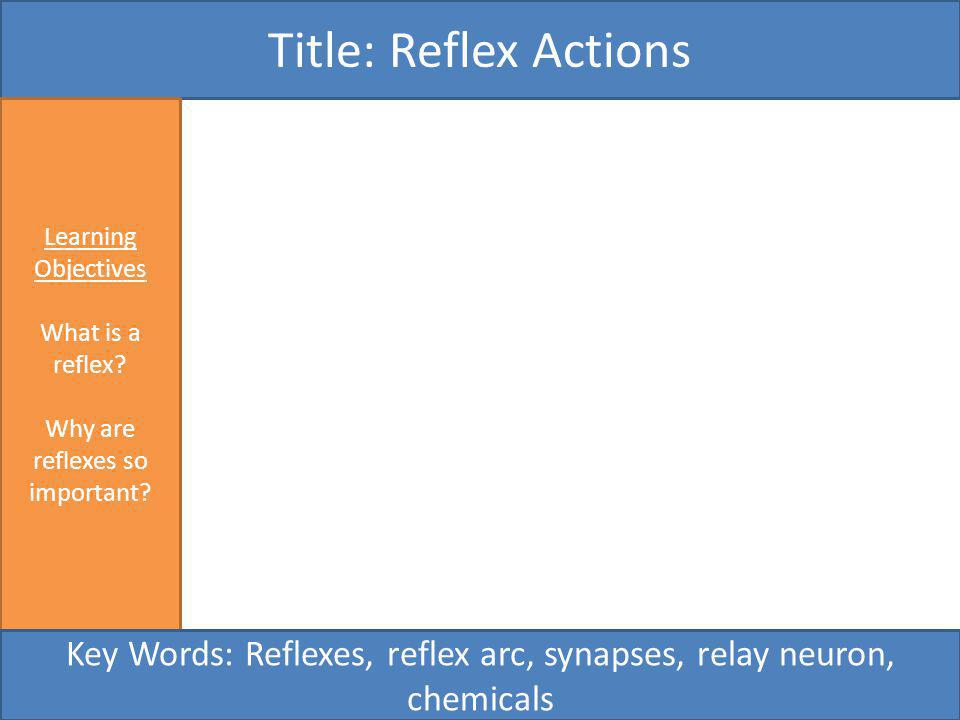 Title: Reflex Actions Learning Objectives. What is a reflex Why are reflexes so important