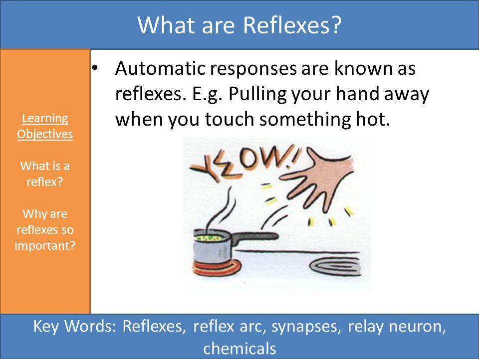 What are Reflexes Learning Objectives. What is a reflex Why are reflexes so important