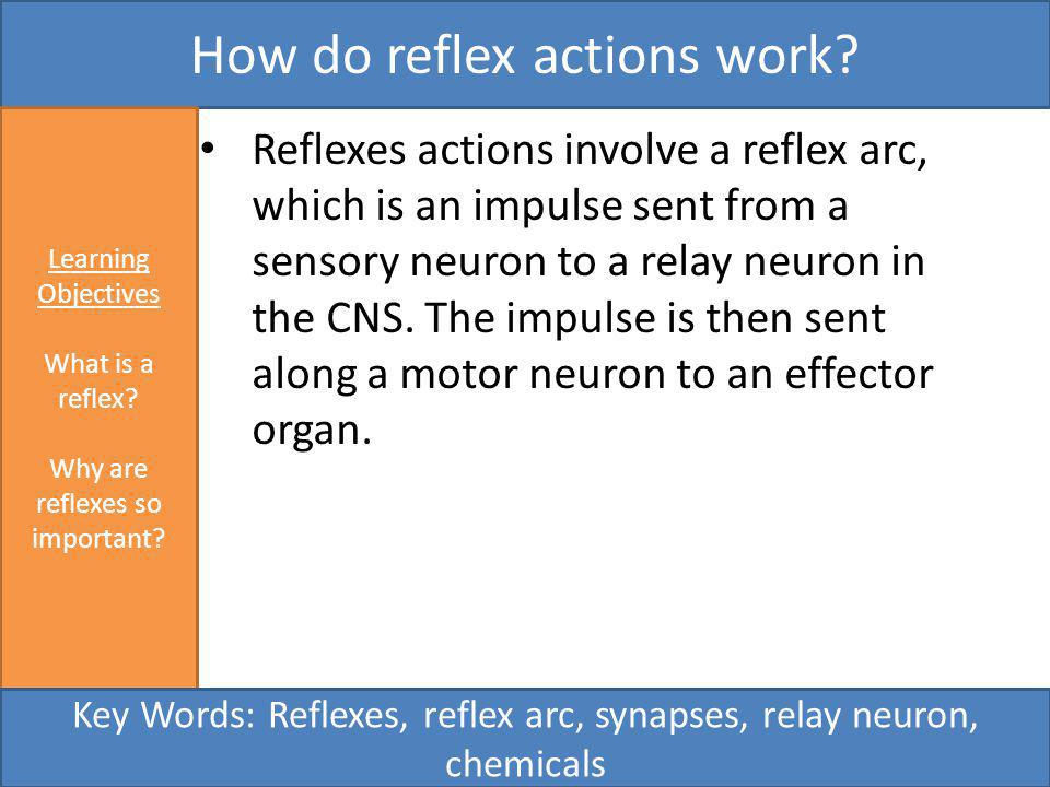 How do reflex actions work