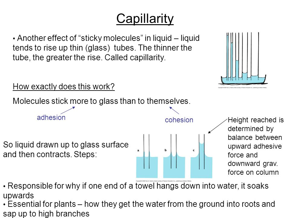 Capillarity How exactly does this work