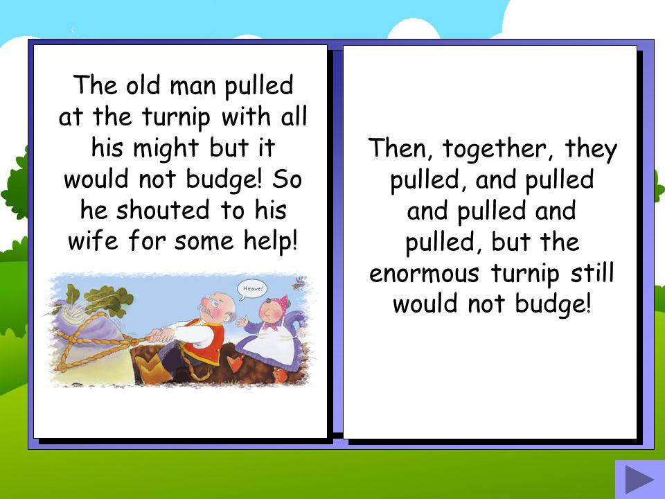 The old man pulled at the turnip with all his might but it would not budge! So he shouted to his wife for some help!