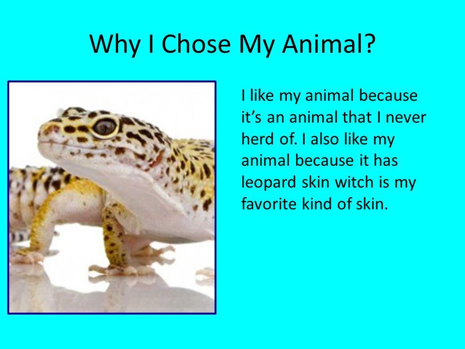 Why I Chose My Animal