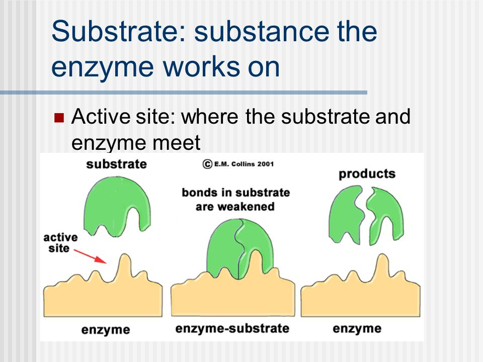 Substrate: substance the enzyme works on