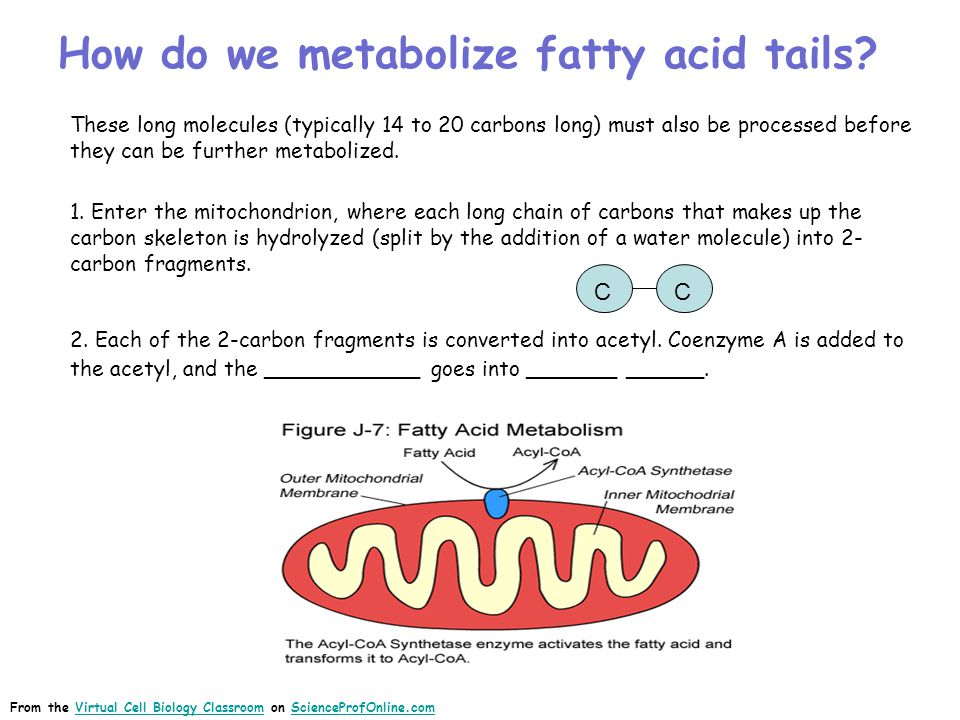 How do we metabolize fatty acid tails