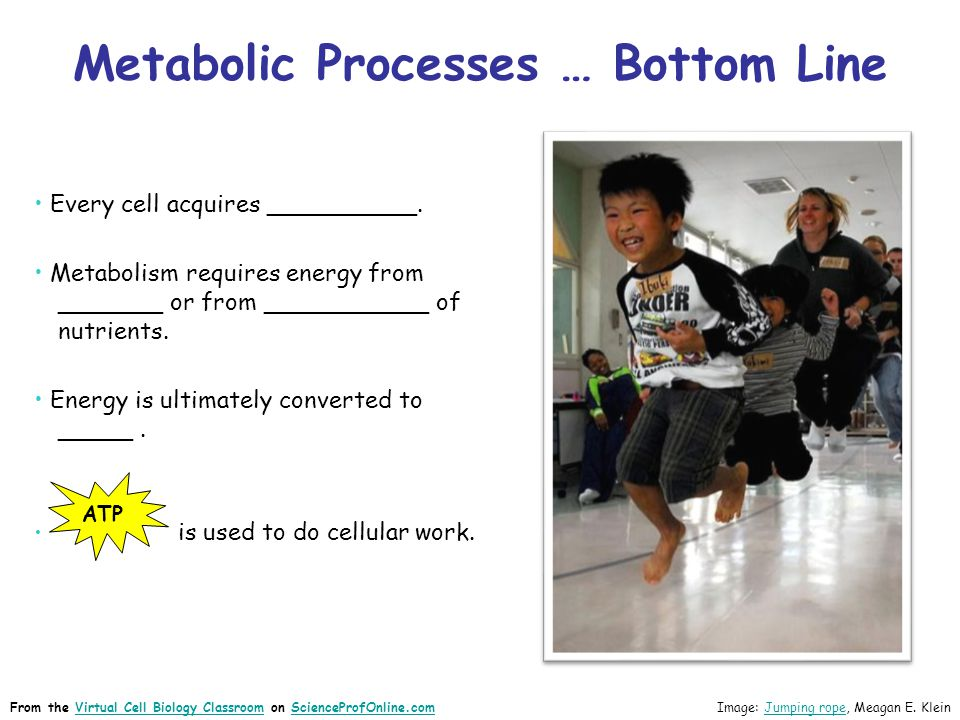 Metabolic Processes … Bottom Line