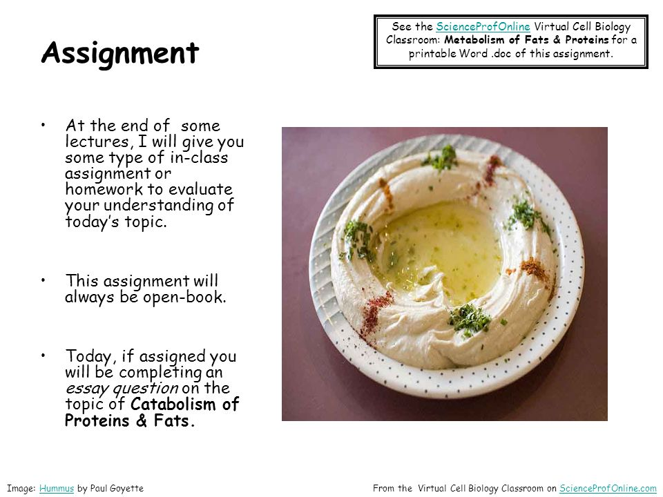 Assignment See the ScienceProfOnline Virtual Cell Biology Classroom: Metabolism of Fats & Proteins for a printable Word .doc of this assignment.