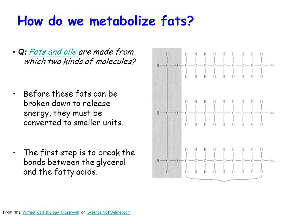 How do we metabolize fats