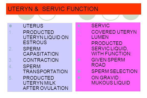 UTERYN & SERVIC FUNCTION