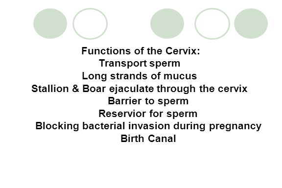 Functions of the Cervix: