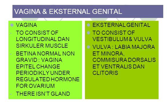 VAGINA & EKSTERNAL GENITAL