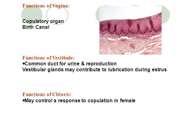 Functions of Vestibule: