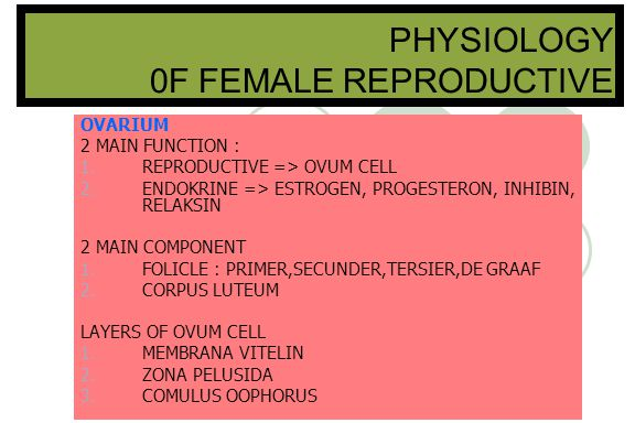 PHYSIOLOGY 0F FEMALE REPRODUCTIVE