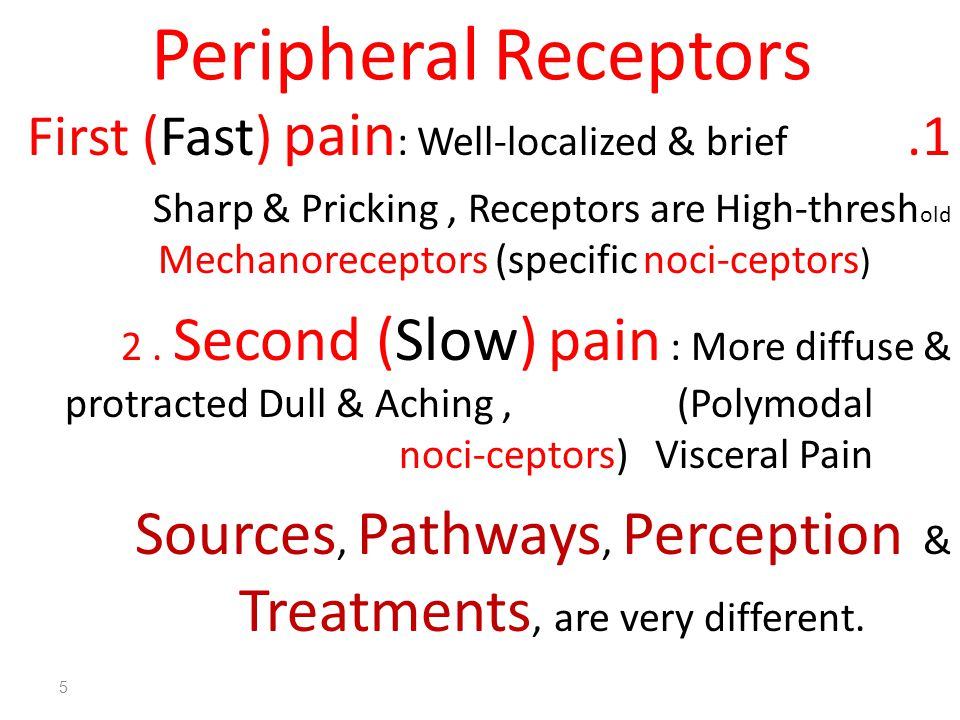 Peripheral Receptors First (Fast) pain: Well-localized & brief.