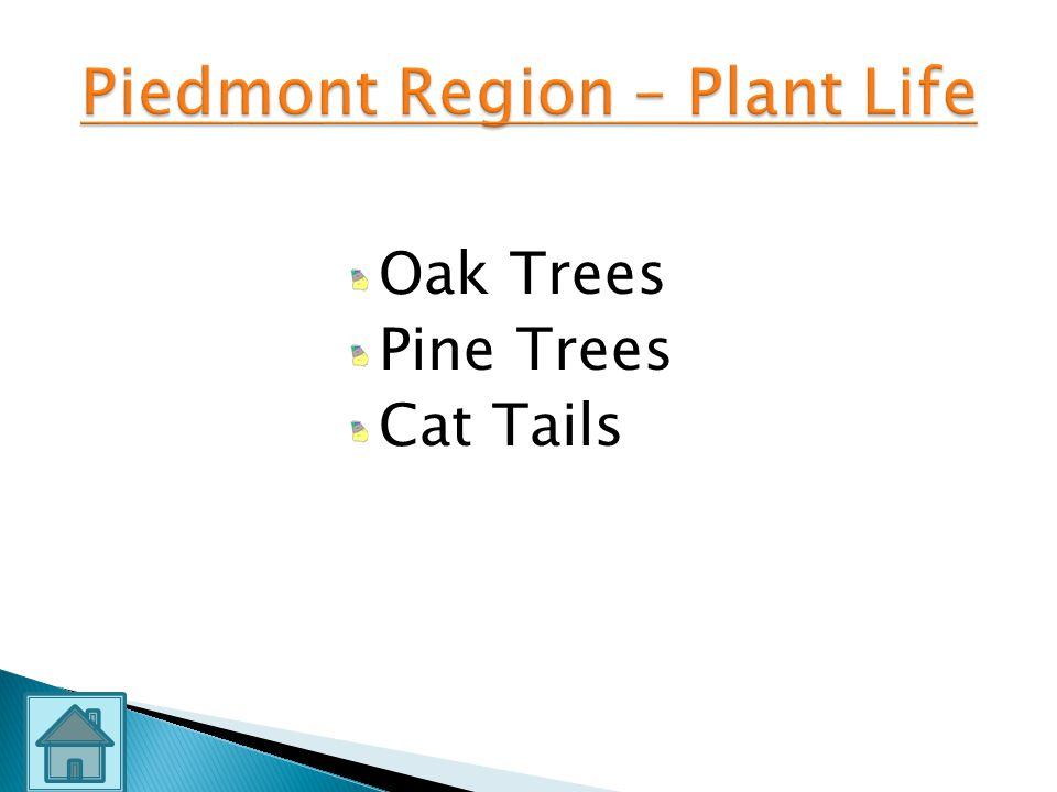 Piedmont Region – Plant Life