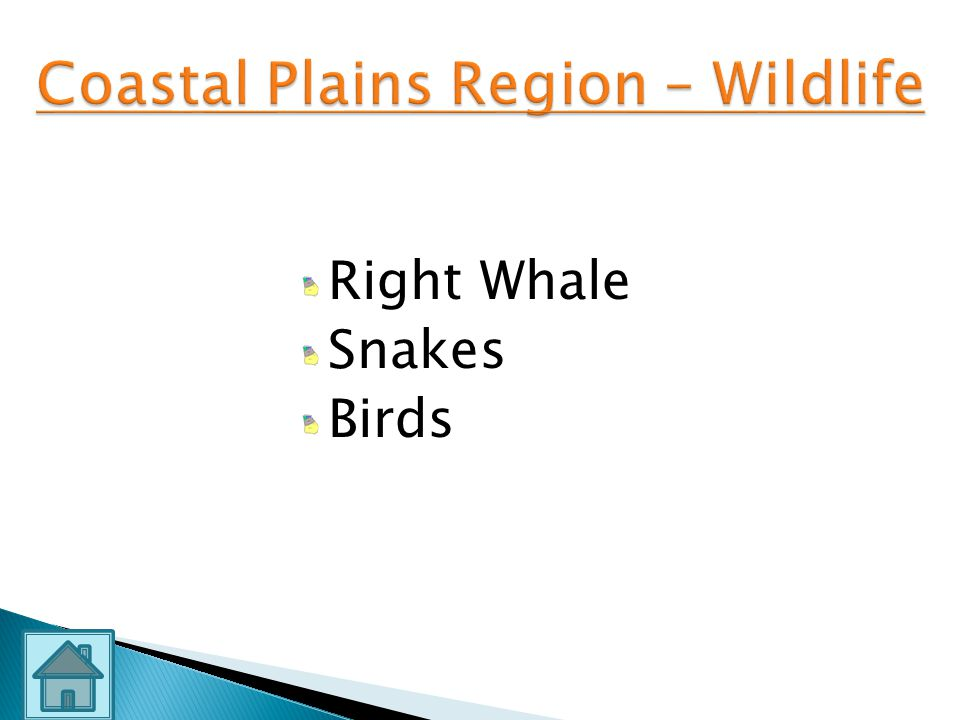 Coastal Plains Region – Wildlife