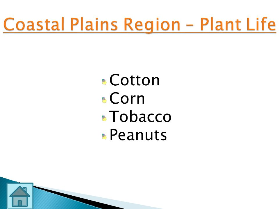 Coastal Plains Region – Plant Life