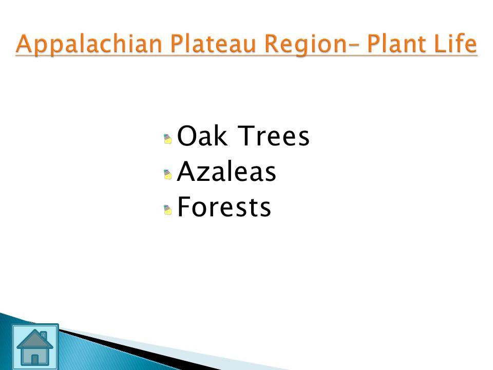 Appalachian Plateau Region– Plant Life