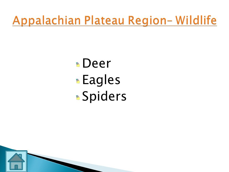 Appalachian Plateau Region– Wildlife