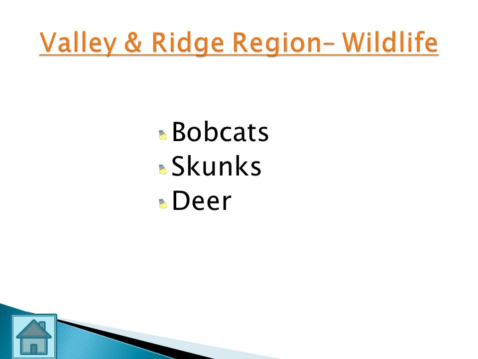 Valley & Ridge Region– Wildlife