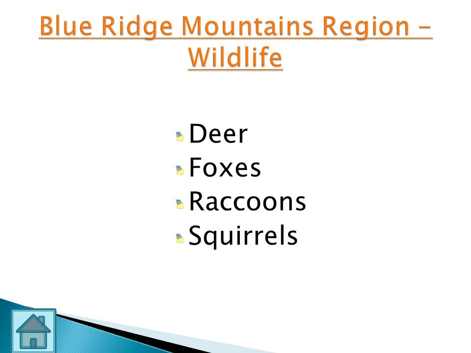 Blue Ridge Mountains Region - Wildlife