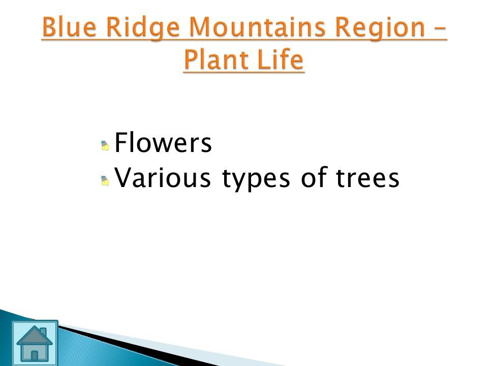 Blue Ridge Mountains Region – Plant Life