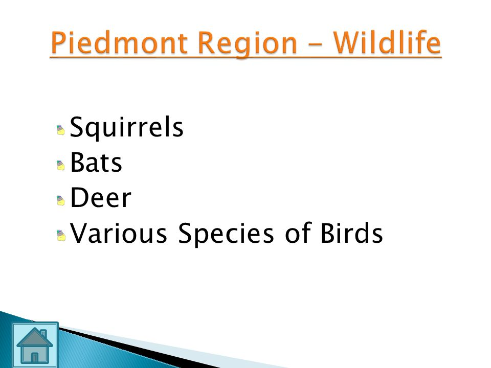 Piedmont Region - Wildlife
