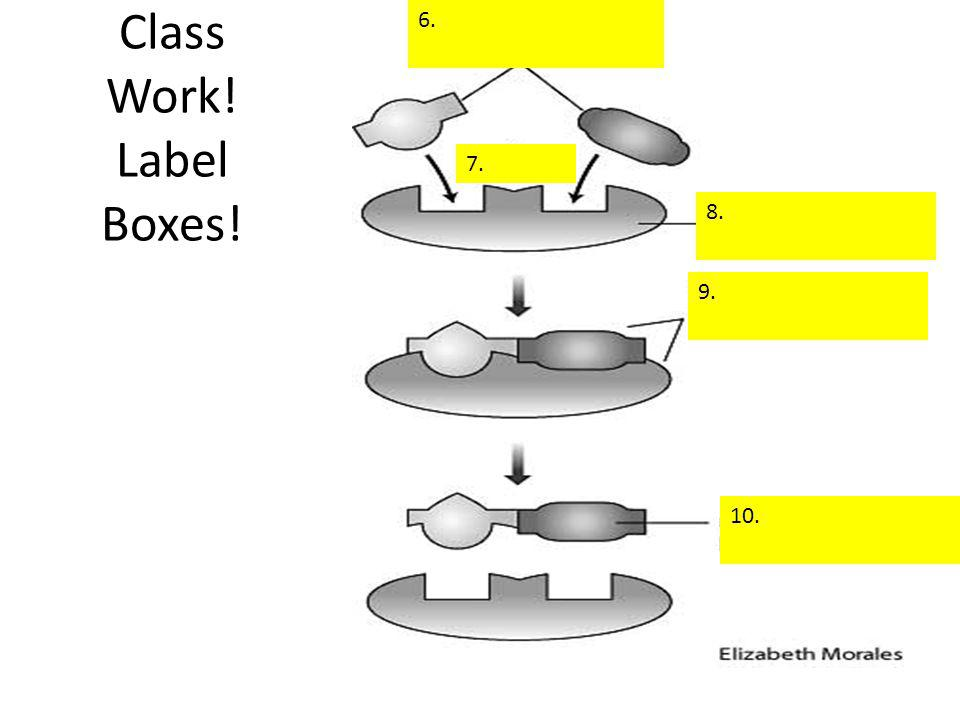 6. Class Work! Label Boxes! 7. 8. 9. 10.