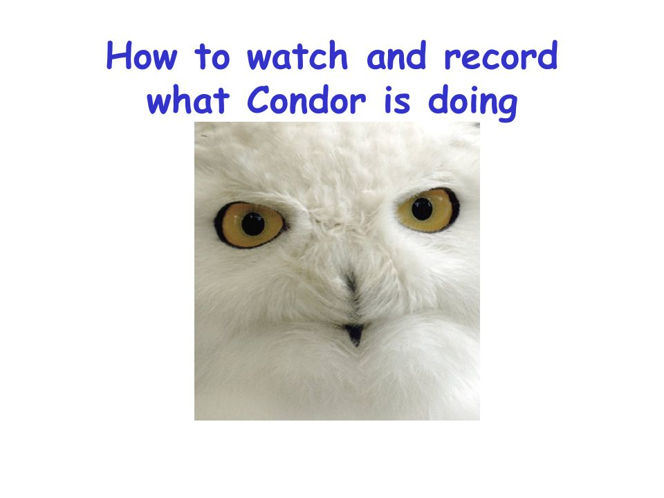 How to watch and record what Condor is doing