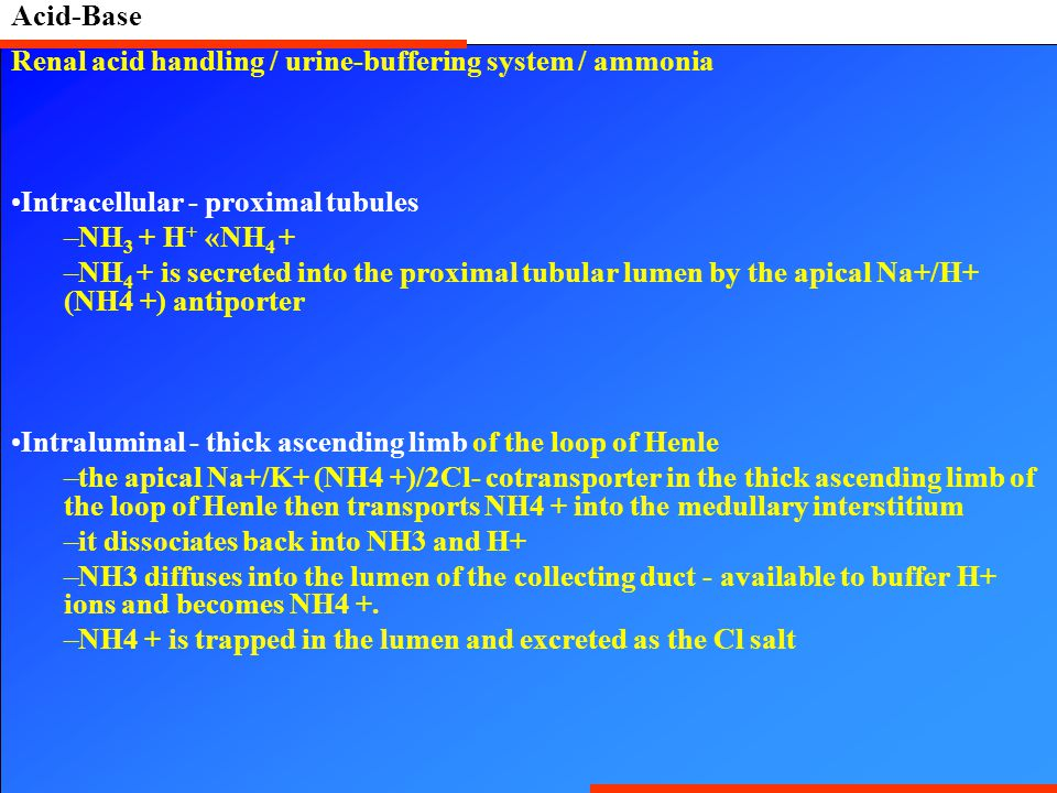 Renal acid handling / urine-buffering system / ammonia