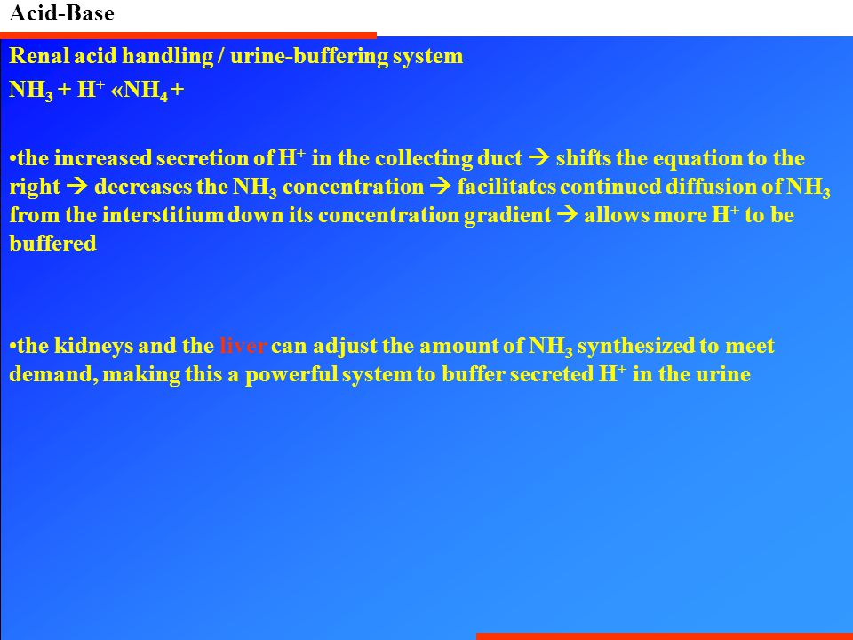 Acid-Base Renal acid handling / urine-buffering system. NH3 + H+ «NH4 +