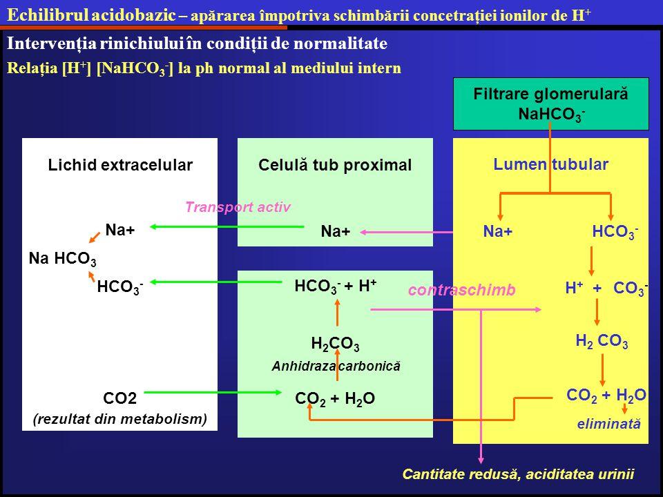 (rezultat din metabolism) Cantitate redusă, aciditatea urinii