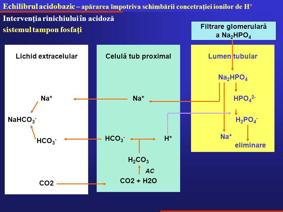 Intervenţia rinichiului în acidoză sistemul tampon fosfaţi