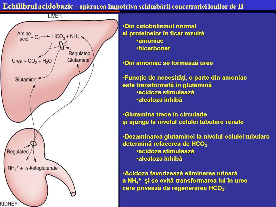 Echilibrul acidobazic – apărarea împotriva schimbării concetraţiei ionilor de H+