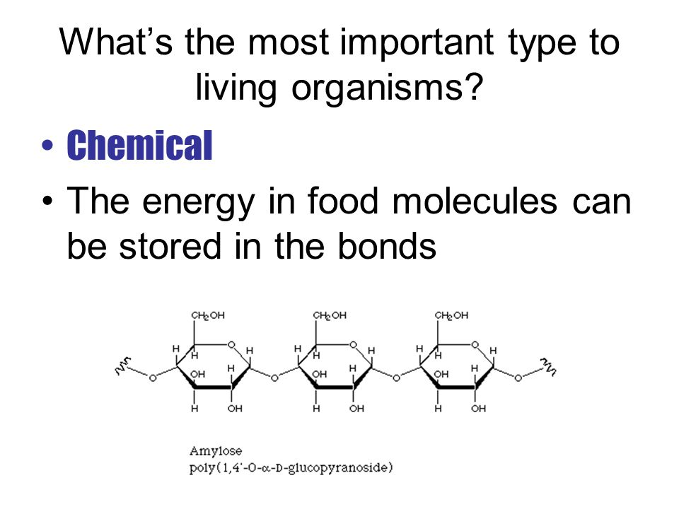 What's the most important type to living organisms