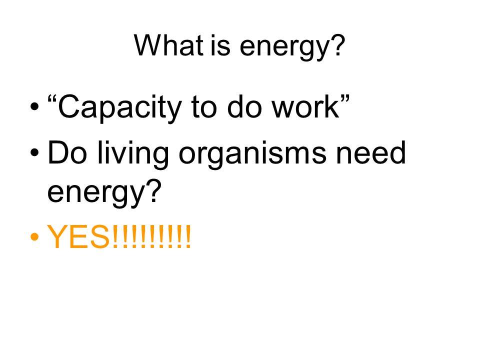 Do living organisms need energy YES!!!!!!!!!