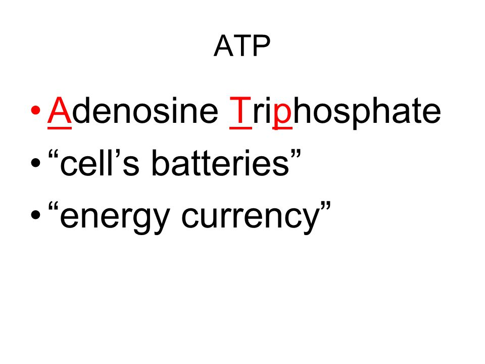 Adenosine Triphosphate cell's batteries energy currency
