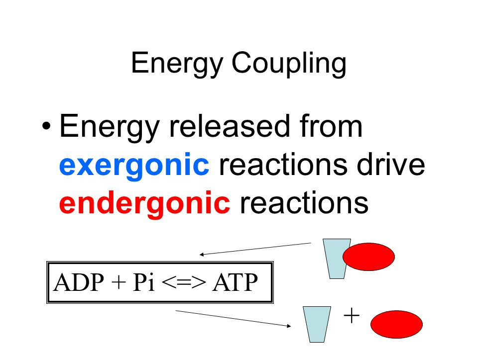 Energy released from exergonic reactions drive endergonic reactions