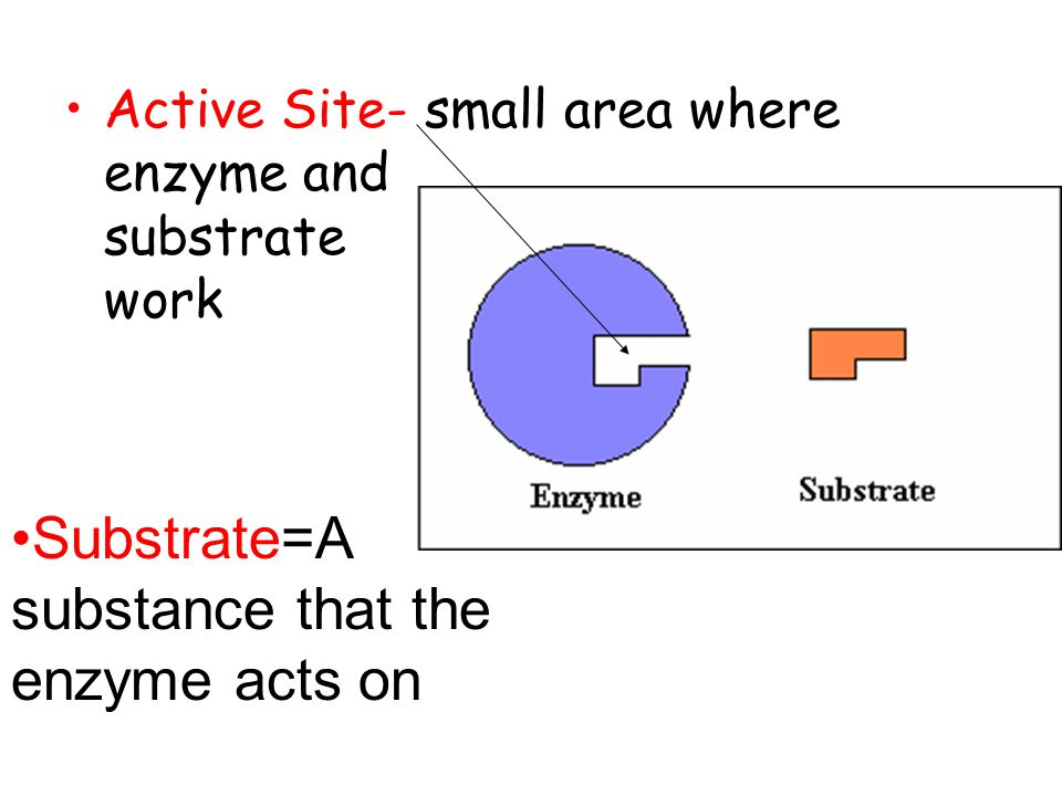 Substrate=A substance that the enzyme acts on