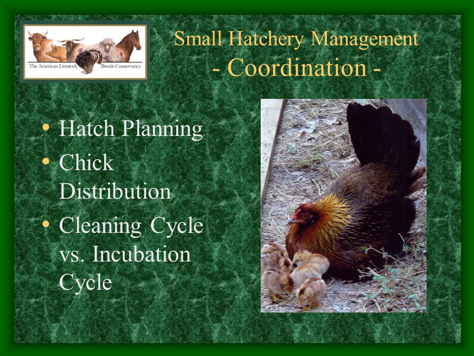 Small Hatchery Management - Coordination -