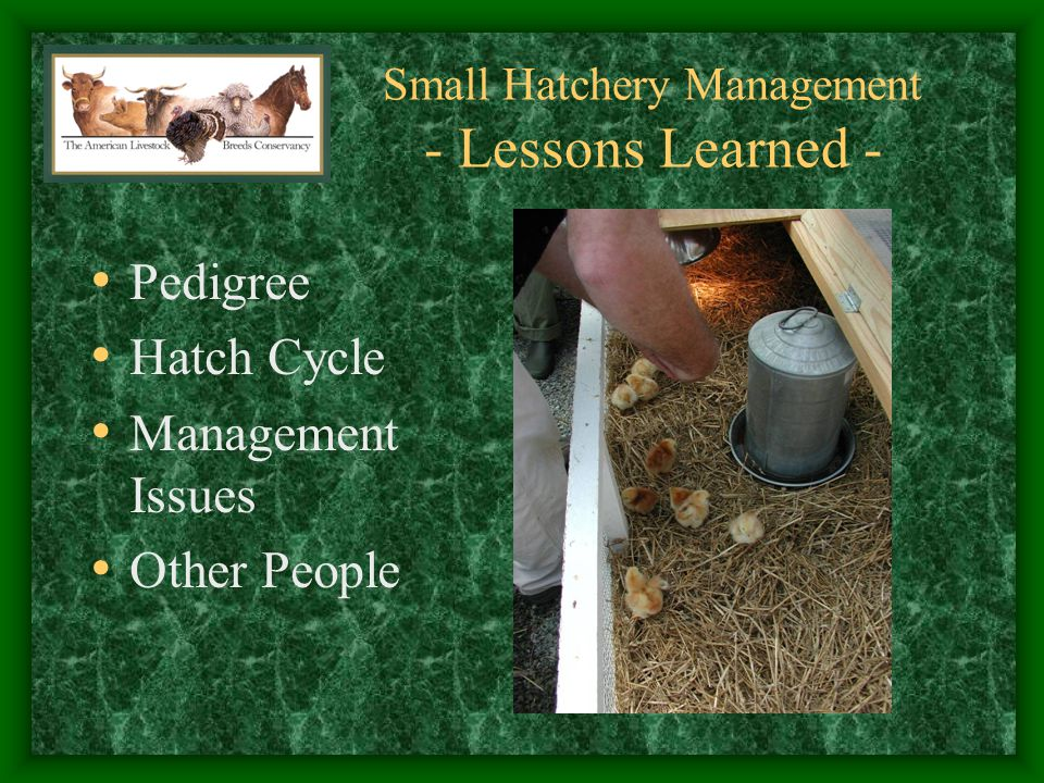 Small Hatchery Management - Lessons Learned -
